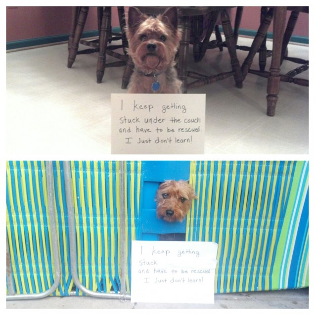 PippinShaming