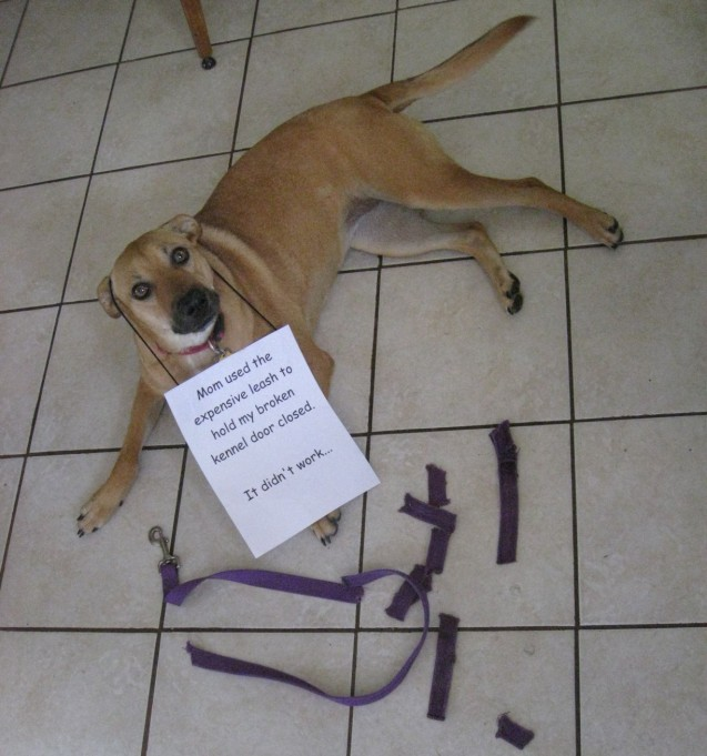 daisy-shaming