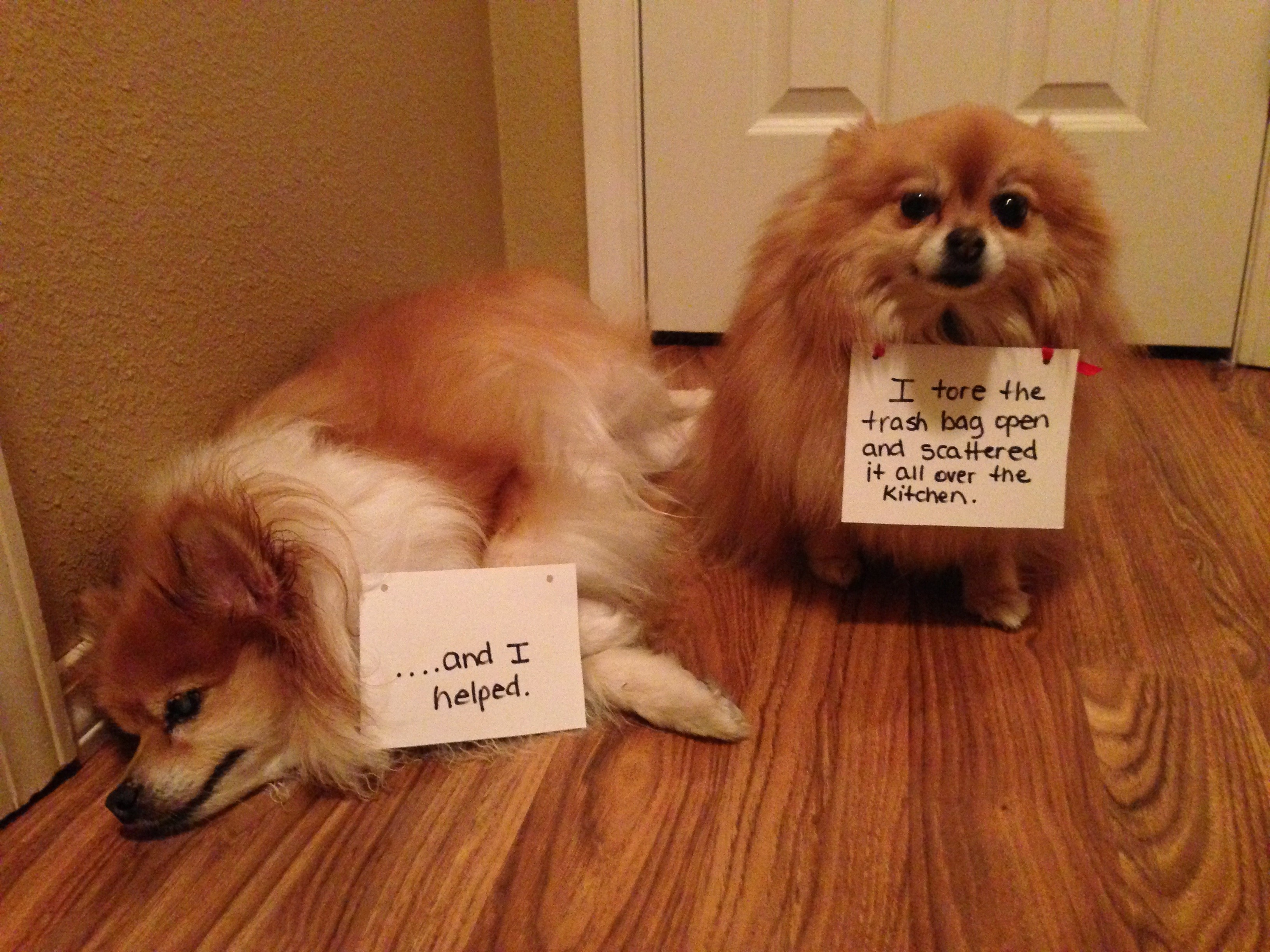 Friendly reminder that yesterday was garbage day - Dogshaming