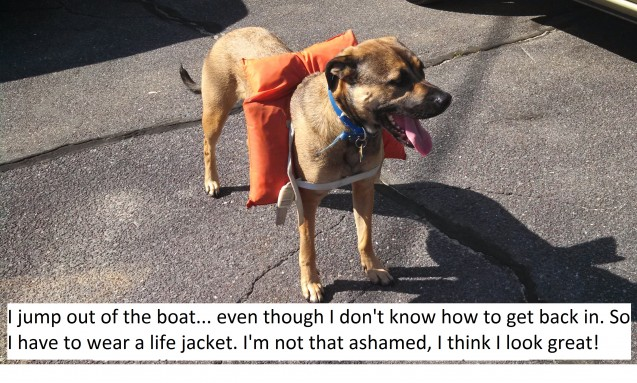 Dog-Shaming-Submission