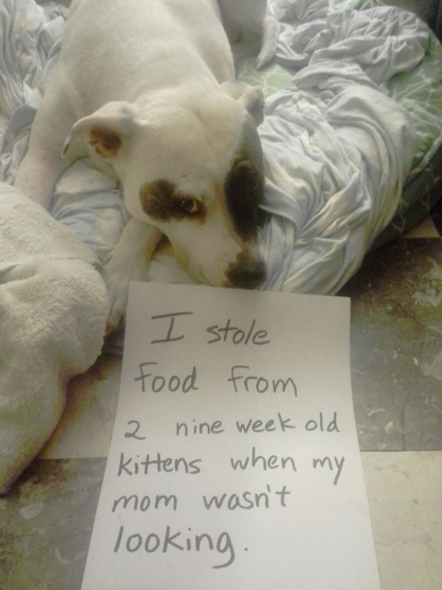 Food-thief