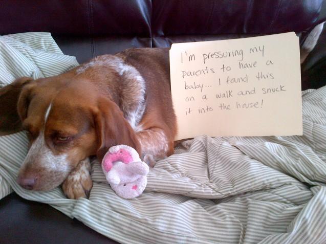 Shame-Penny