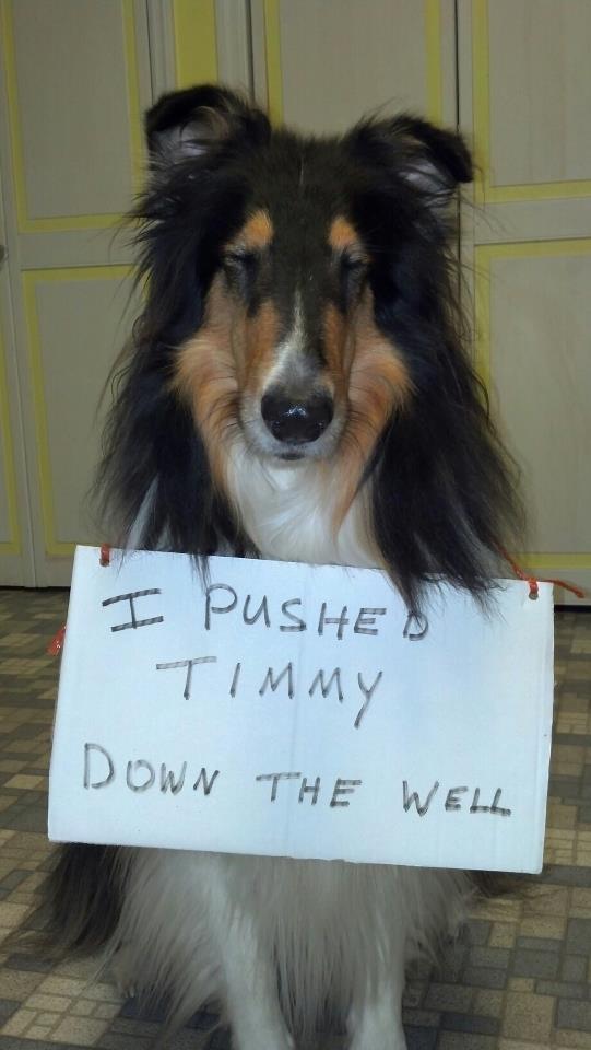 bad-lassie