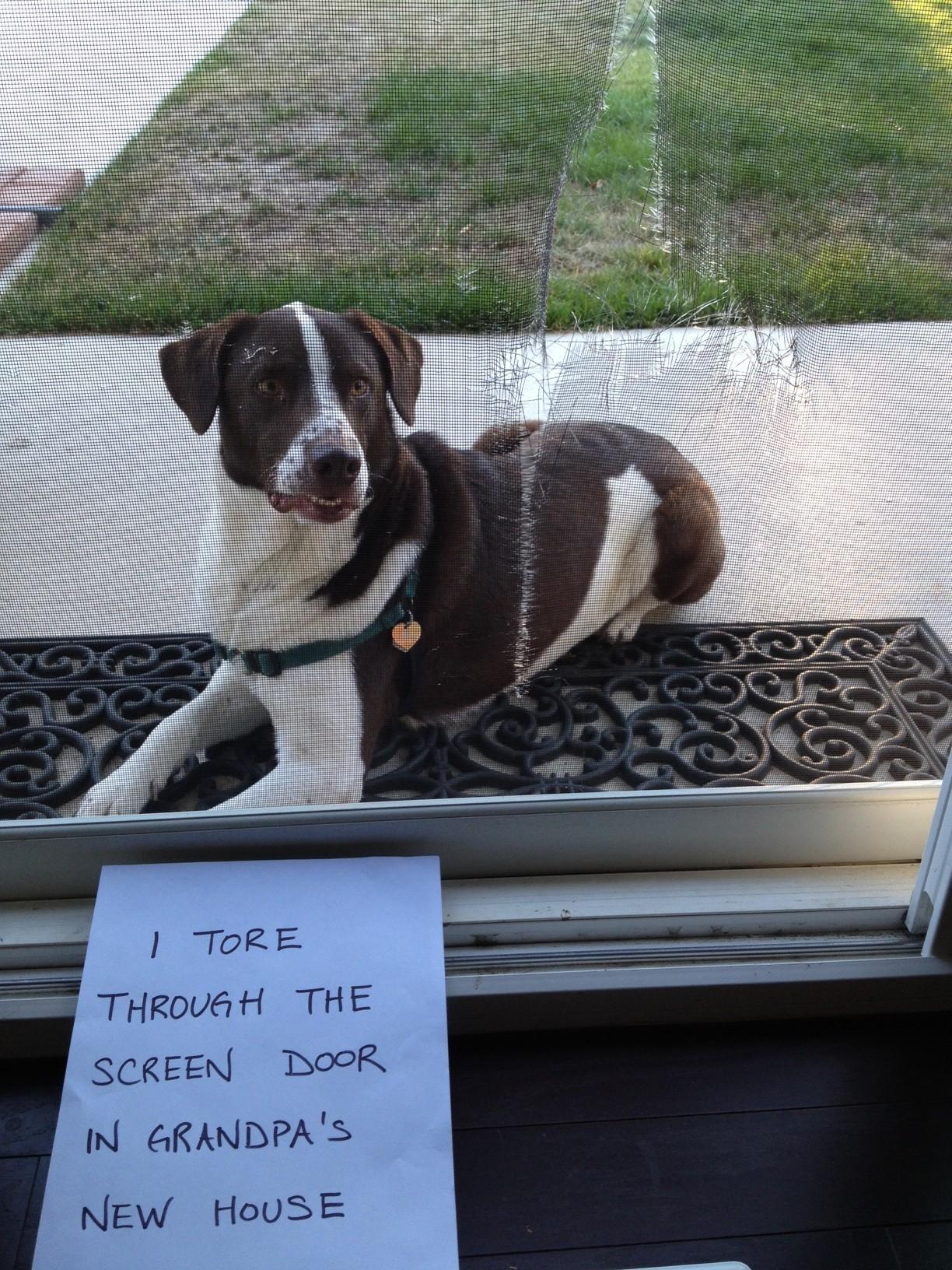 Screen Door No More Dogshaming