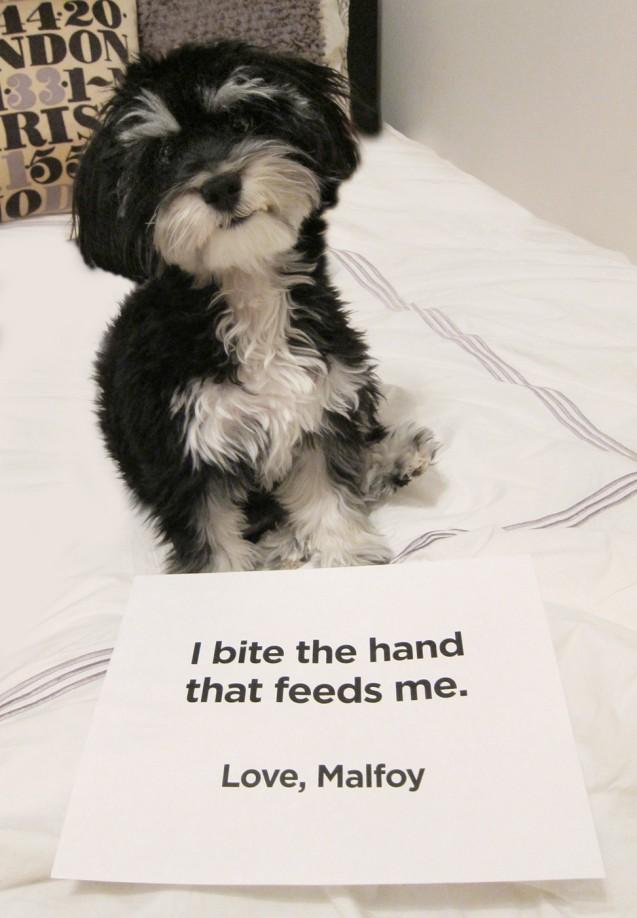Pup-Shaming