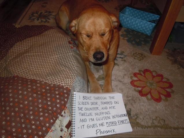 bad-dog-006