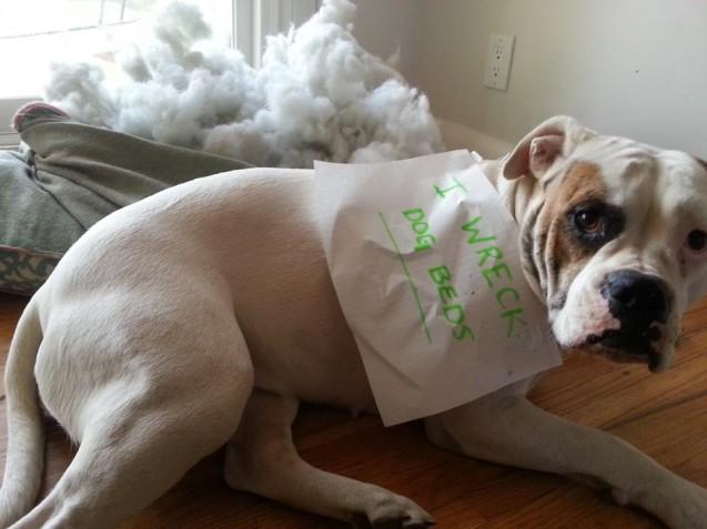 charli-dog-bed