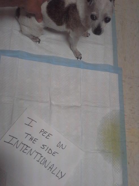 dog-sign