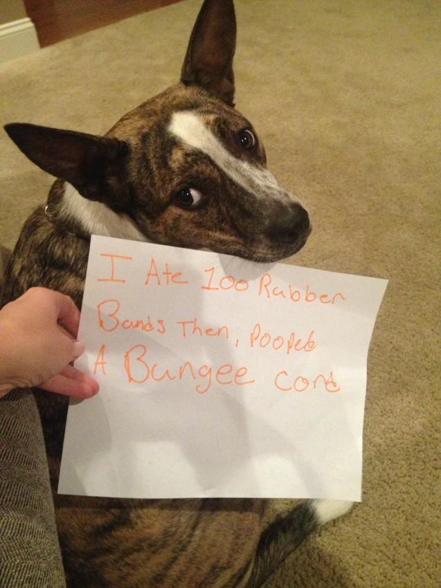 Dog-Shaming2