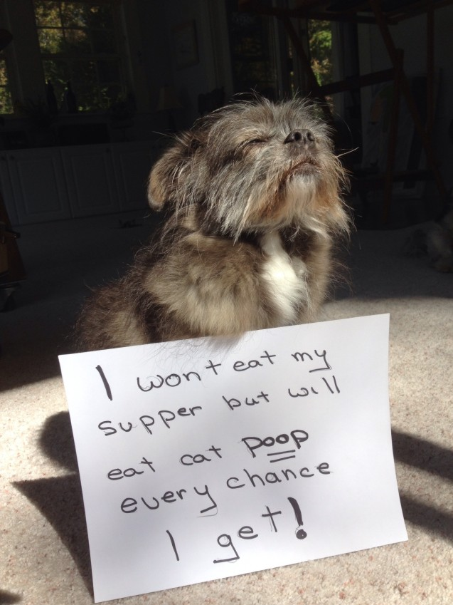 Hazel-Dog-Shaming