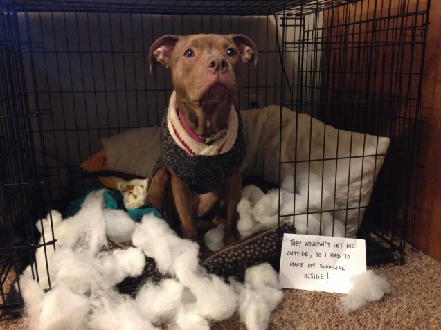 Zero-Dog-Shaming