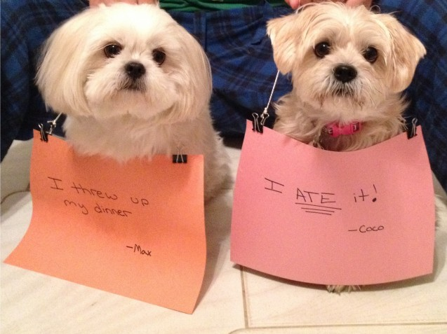 dogshaming-max-and-coco