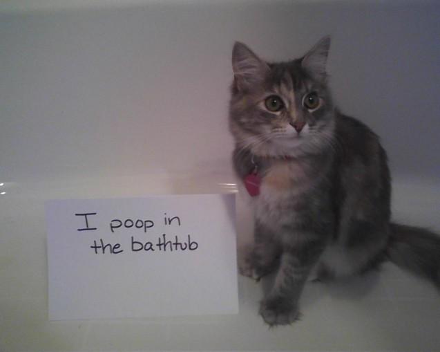 esme-poop