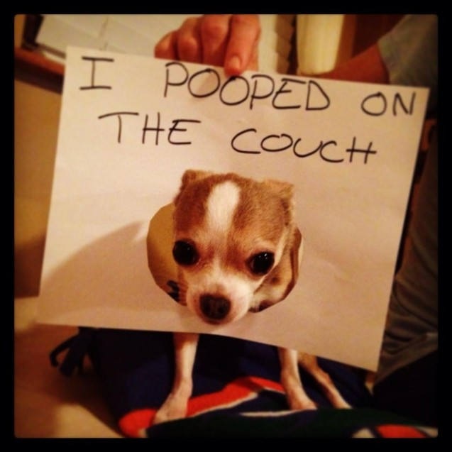 Angel_dog-shaming