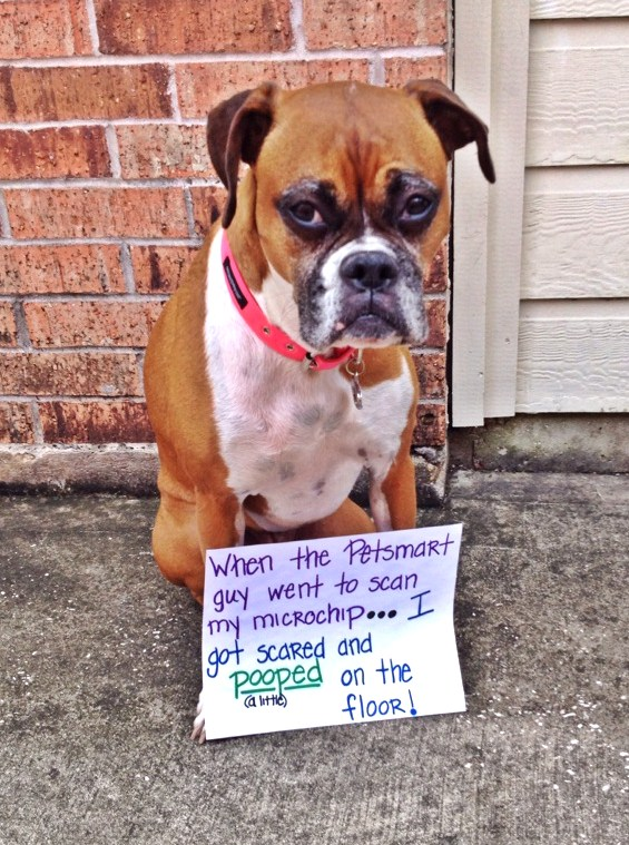Bailey-shaming-pic