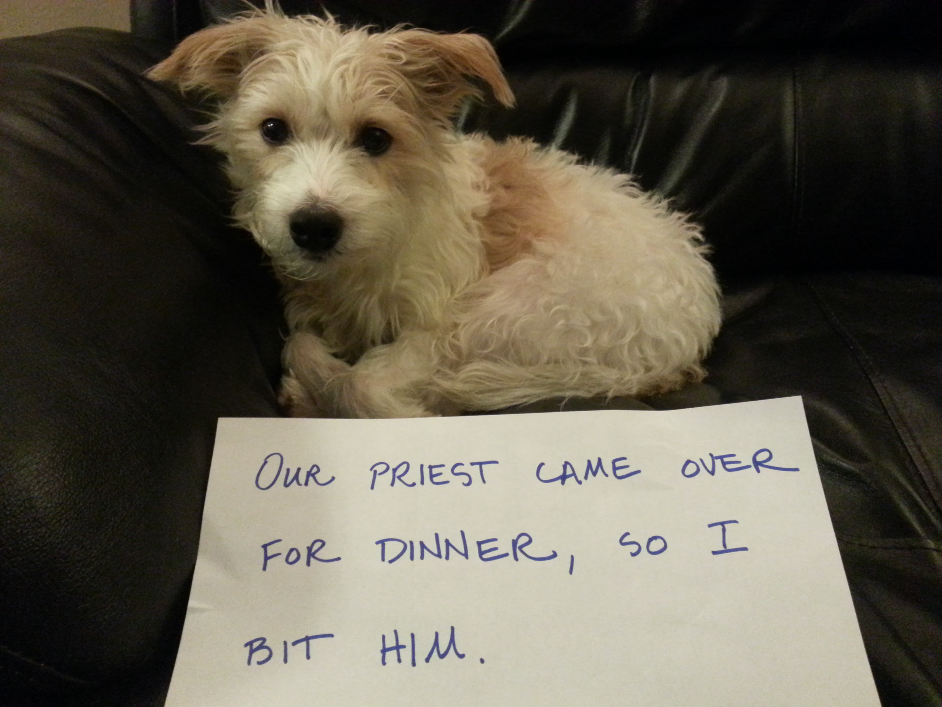 Dog shaming hedgehog