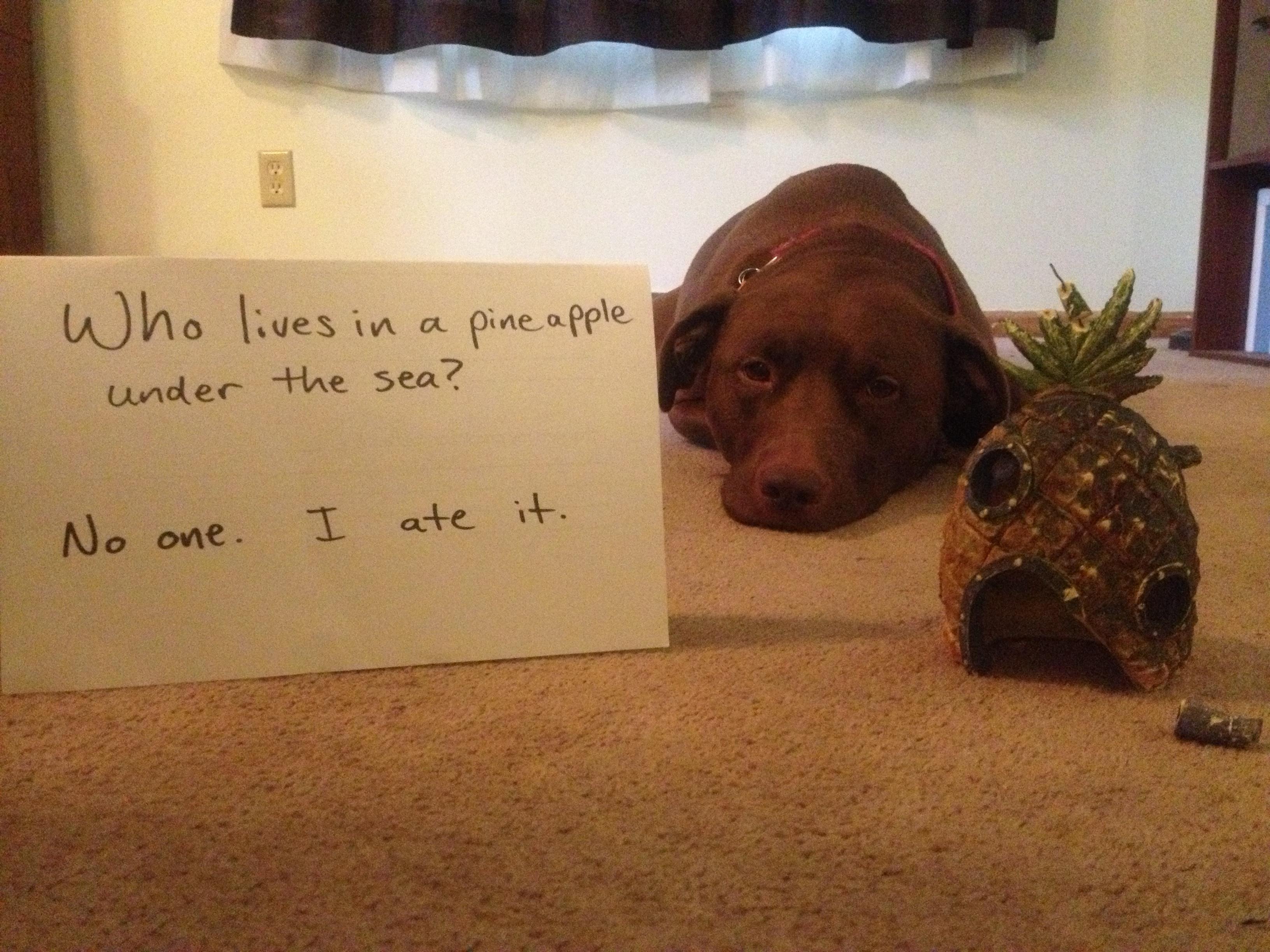 Dog Keeps Eating Tampons