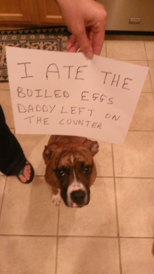 reesee-ate-eggs