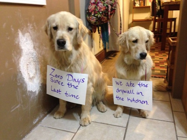 Bad-Dogs