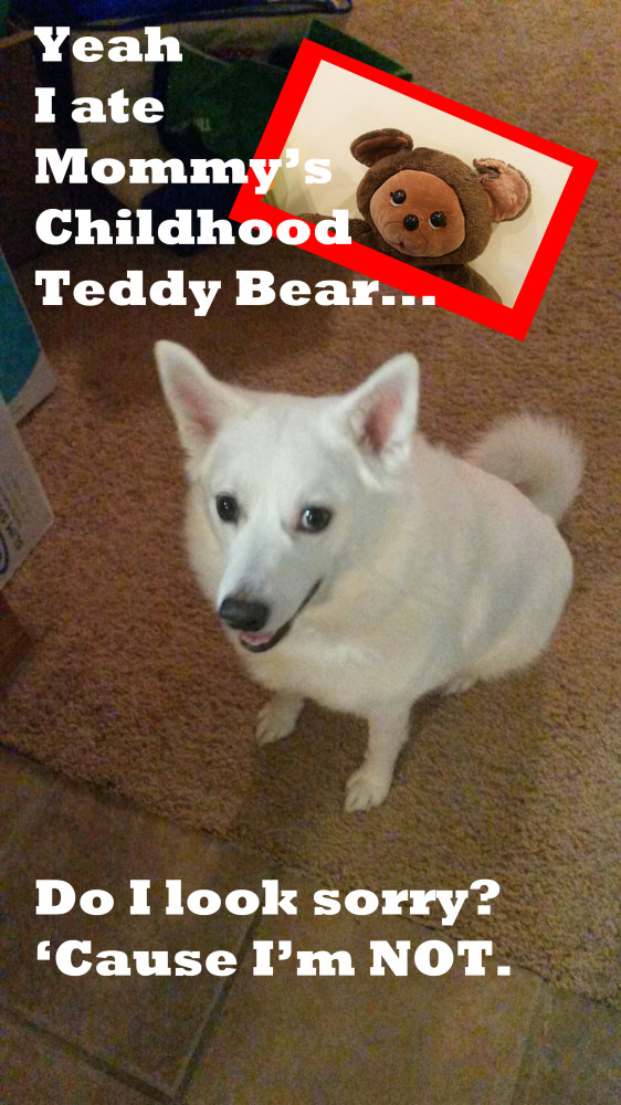 Buddy-Dog-Shaming