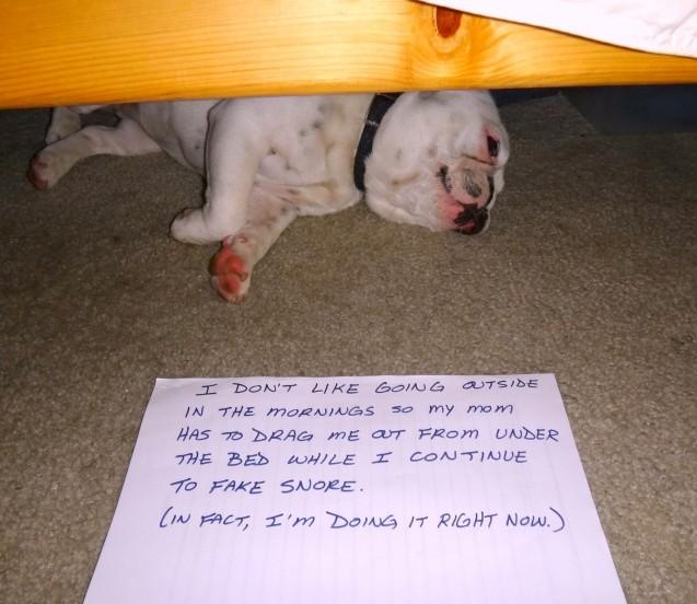 Piggy-fake-snoring