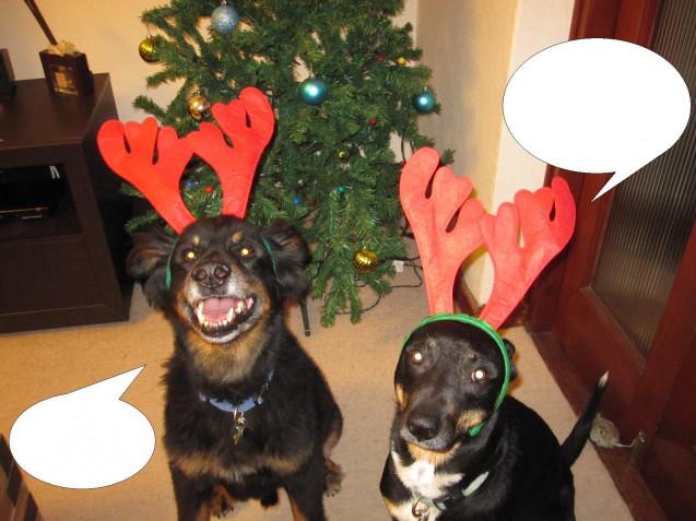dog-shaming-2012yes