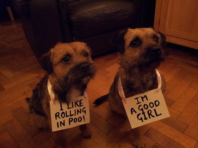 dog-shaming4