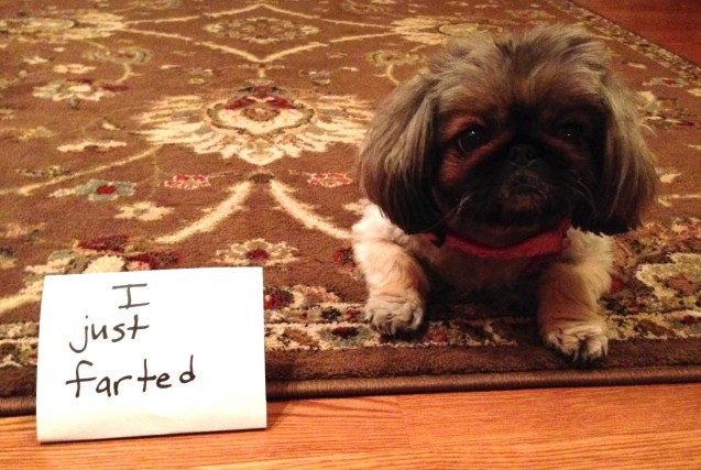 dogshaming1