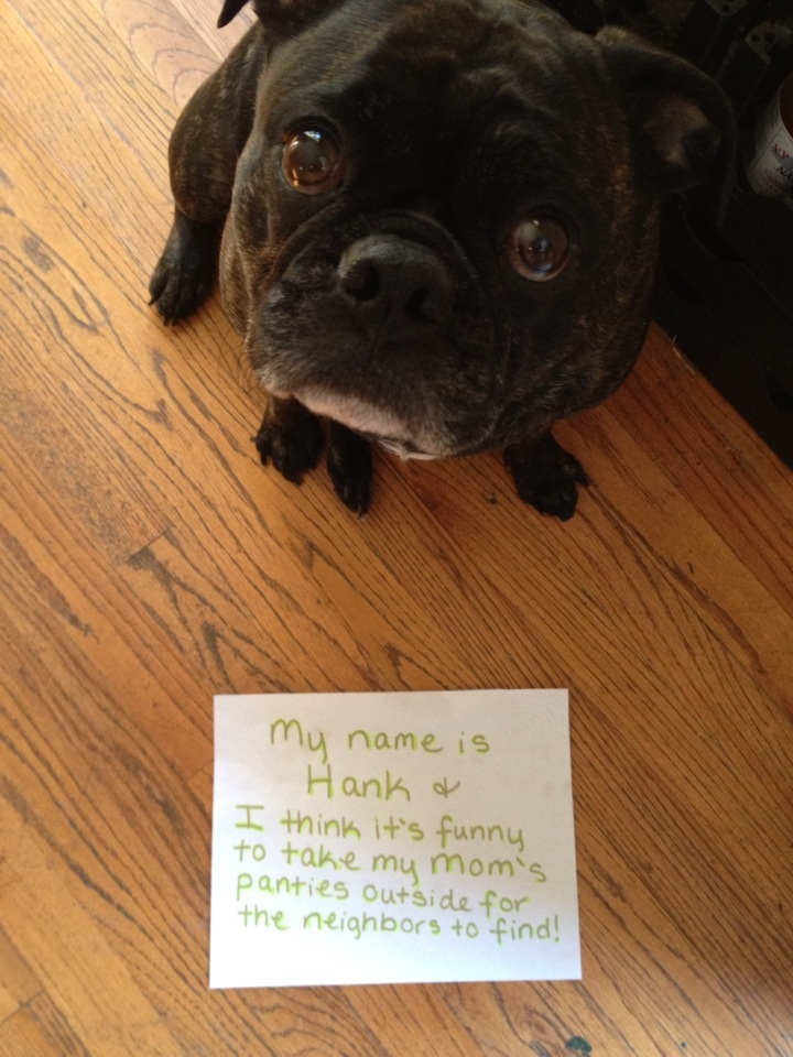 The French (missed) Connection - Dogshaming