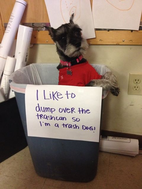 trash-dog