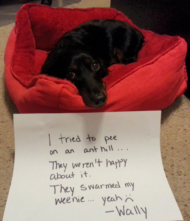 wally-dog-shaming