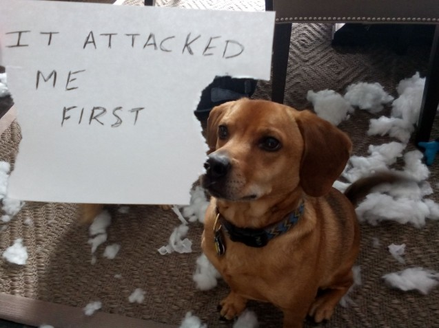 Buddy-Attack