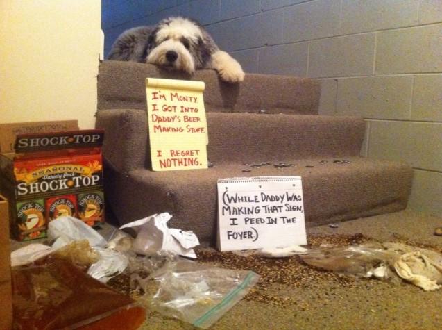 DogShaming-Monty