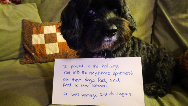 Dogshaming_Jordi_Jan2013_01