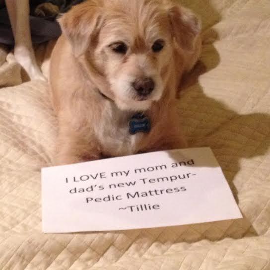 Tillies