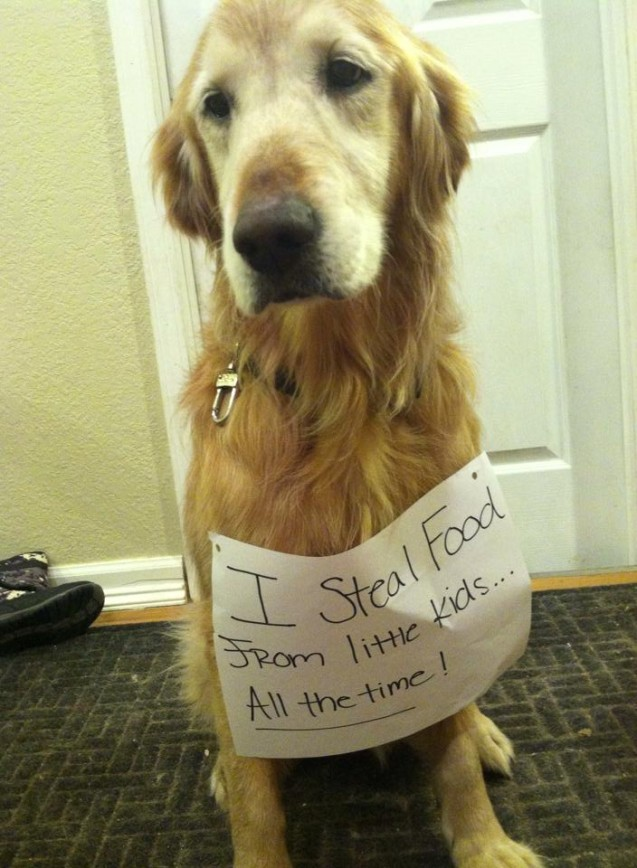 Golden Retriever Archives Page 7 Of 29 Dogshaming