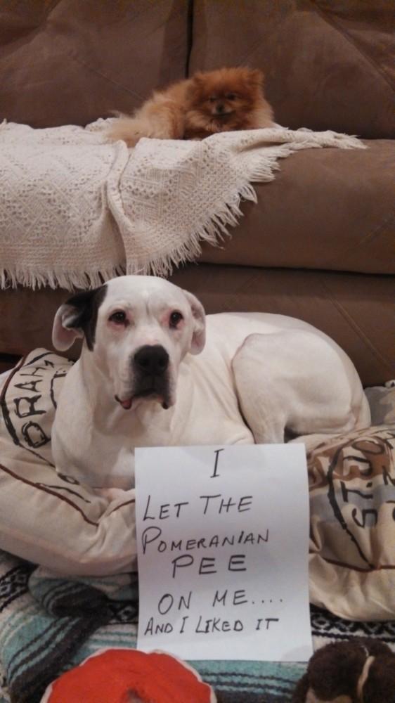 dog_shame