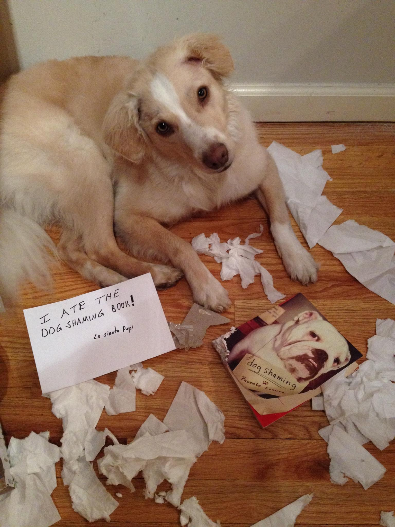 Kali ate the dog shaming book PWas9FSC