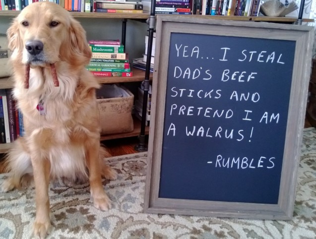 Rumbles-Dogshaming-1