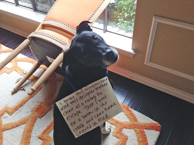 gem-dog-shaming