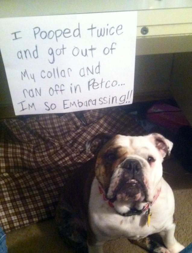 piggy-shaming