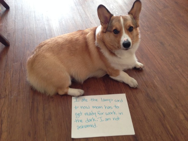 Barnaby-Dogshaming
