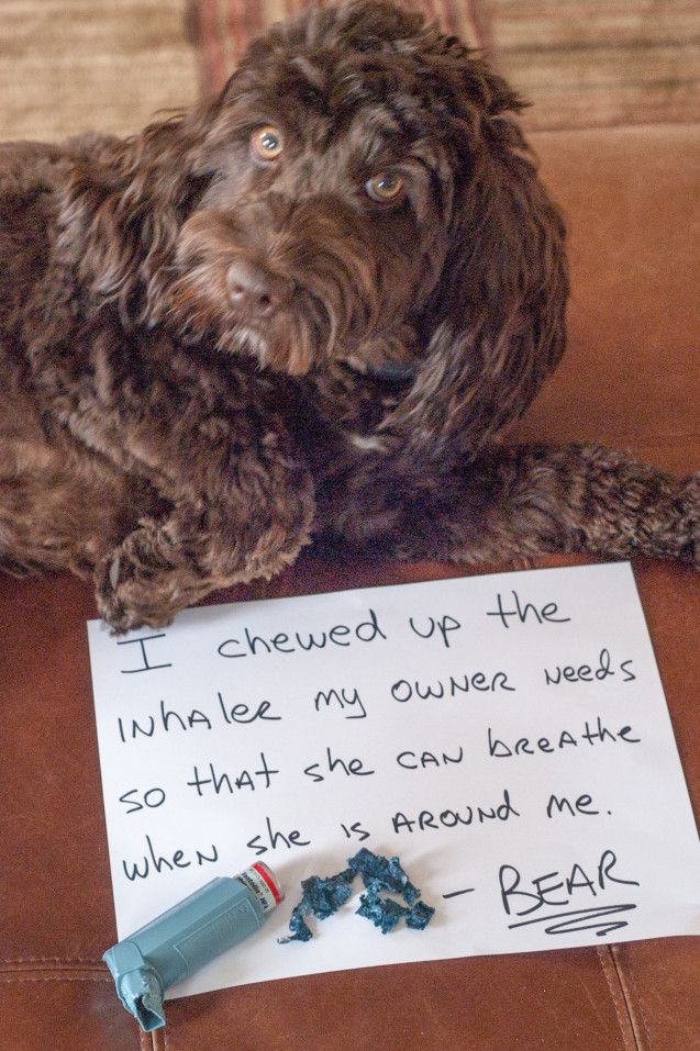 Dog-Shaming-Bear