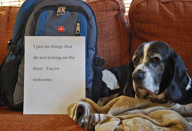 George Dog Shame Resize
