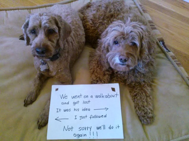 RudiLeo-dog-shaming