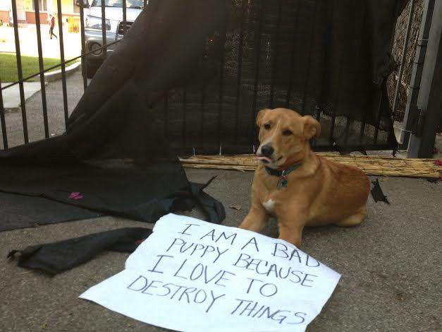 bad-pup