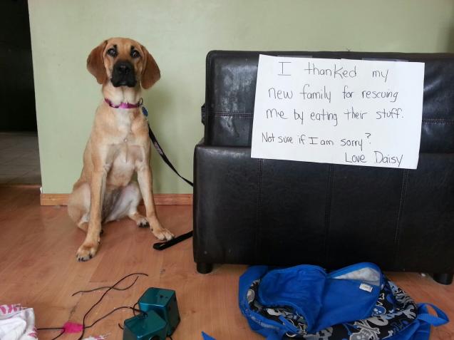 daisydogshaming1