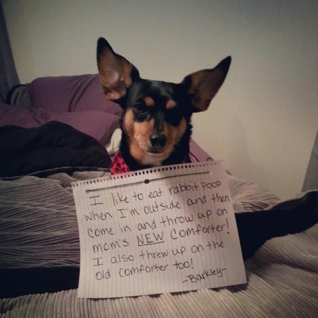 dog-shamming