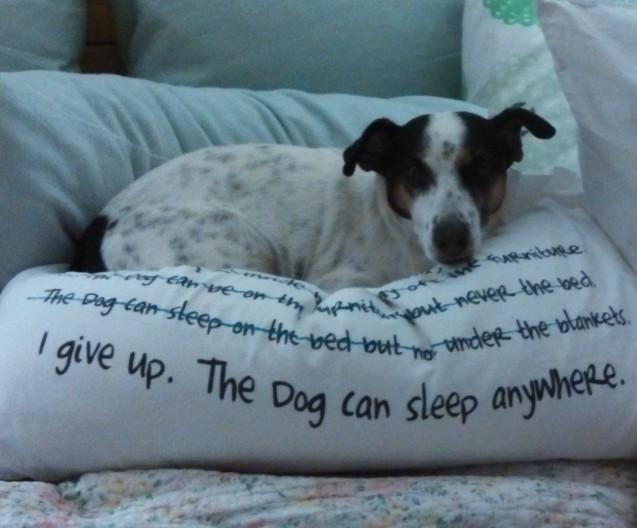 Dormir avec son chien ou pas? - Page 8 I-give-up-637x528