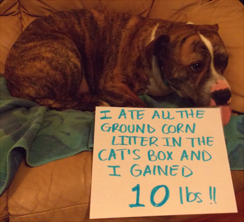 Stop Dogs Eating Chicken Poop